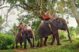 Bali Elephant Ride | Sai Bali Tours