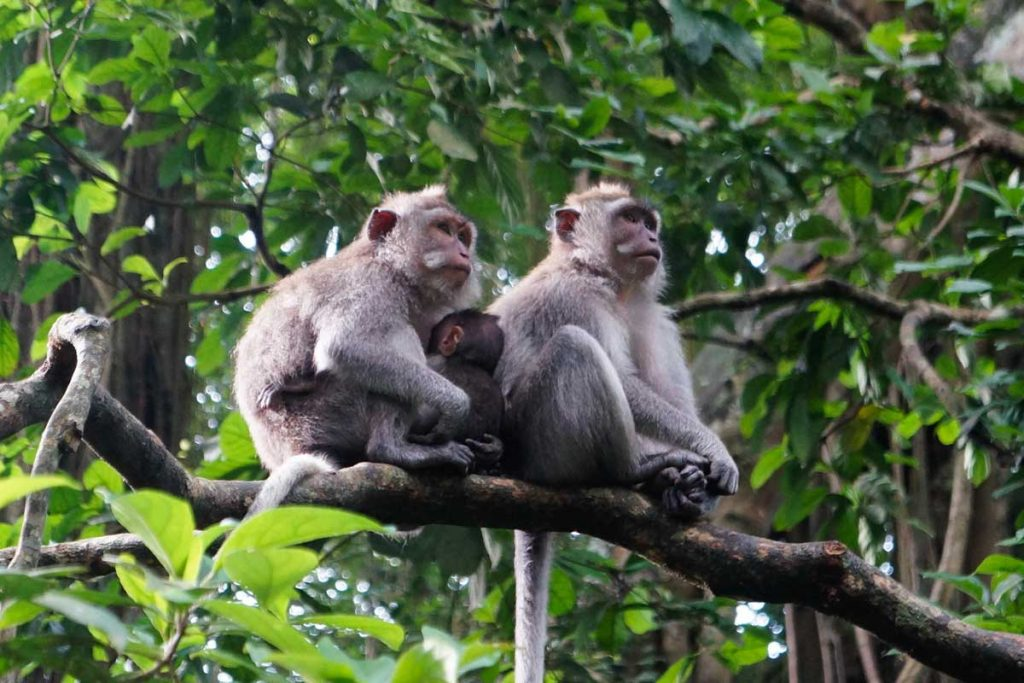 Monkey Forest | Sai Bali Tours