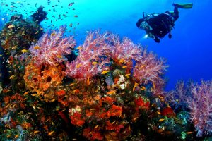 Nusa Dua Diving | Sai Bali Tours